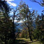 Herbstlicher Bergwald am Risserkogel