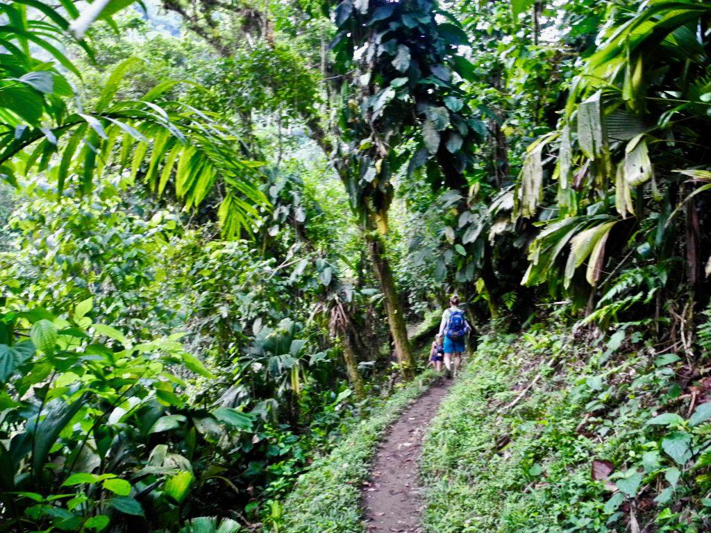 Dschungel Pfade mitten in der Sierra Nevada de Santa Marta