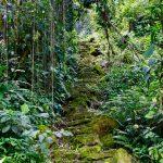 Dschungel-Feeling pur in der Ciudad Perdida, der Verlorenen Stadt