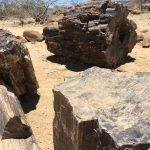 Versteinerte Bäume im Petrified Forest