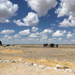 Elefanten im Etoscha Nationalpark