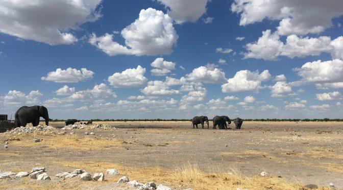 Namibia – Wildtier-Parade im Etosha Park