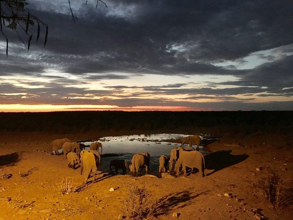 Halali-Camp: Wasserloch mit Elefanten