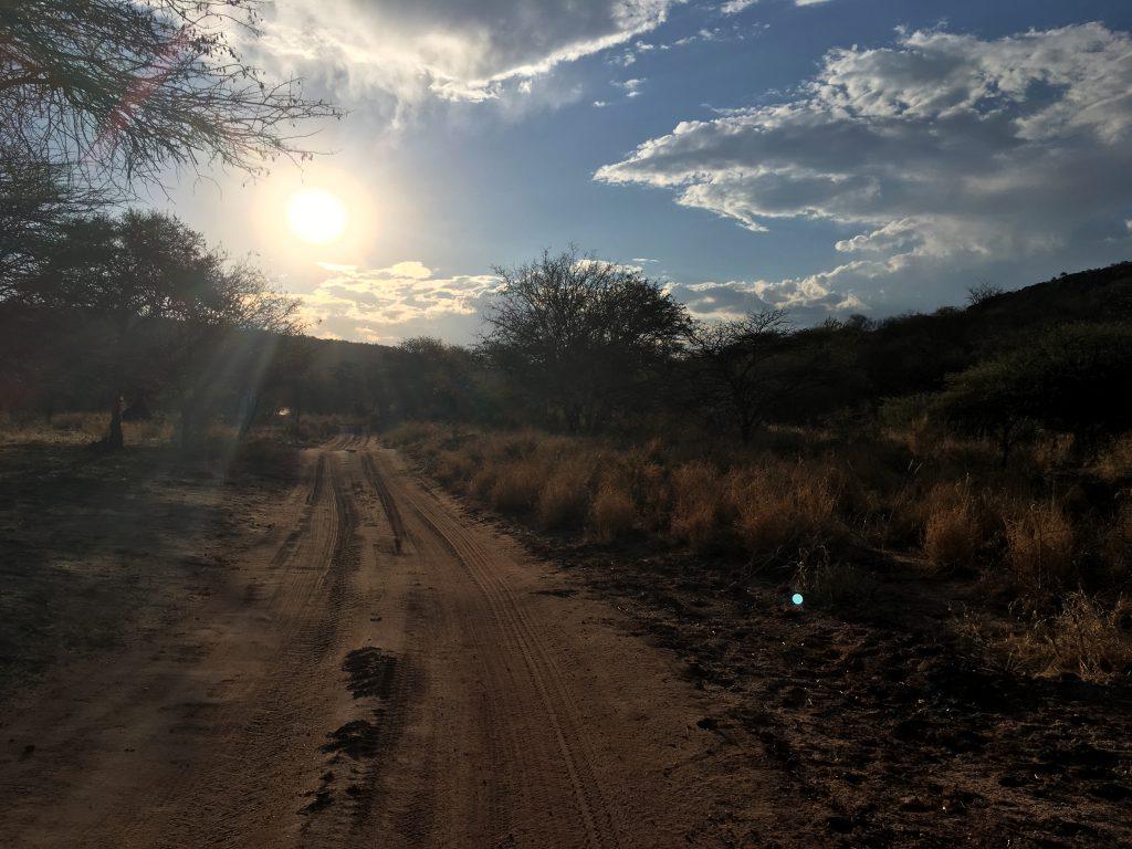 Auf der Suche nach den Nashörnern