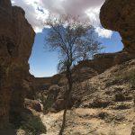 Überlebenskünstler im Sesriem Canyon
