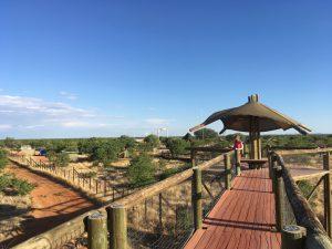 Zur Tier-Beobachtung am Olifantsrus