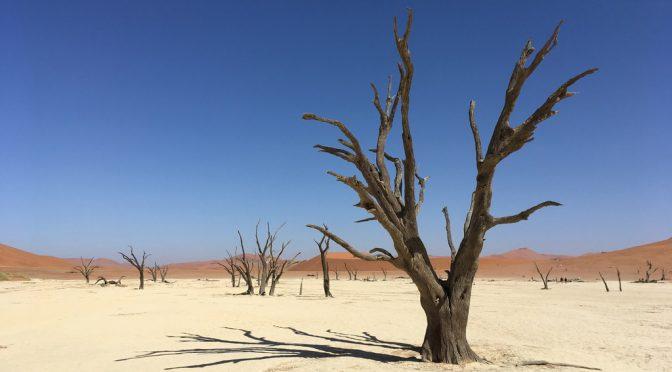 Kameldornbäume im Deadvlei