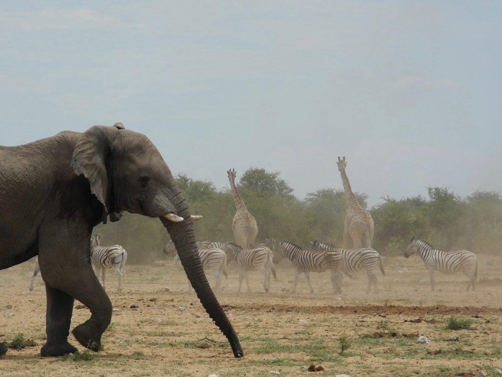 Aufruhr bei den Elefanten