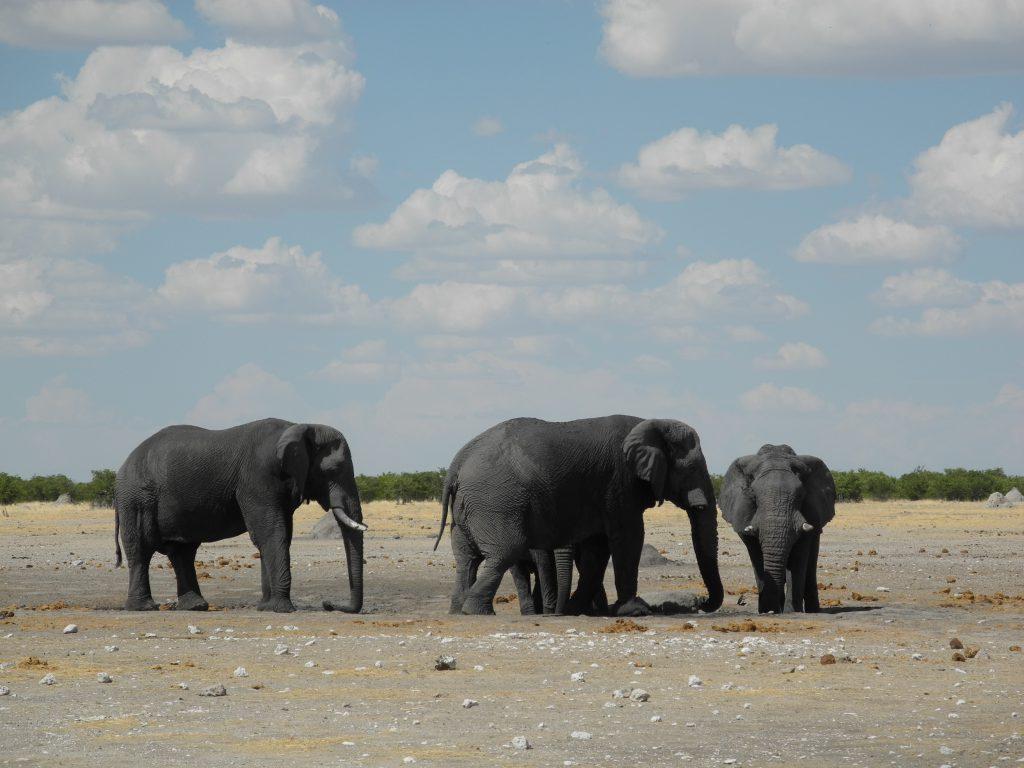 Elefanten aus nächster Nähe!