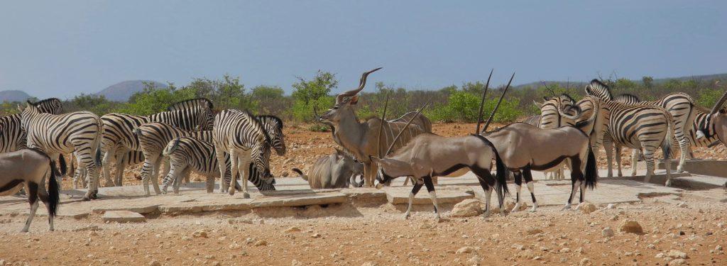 Im westlichen Teil des Etosha Park