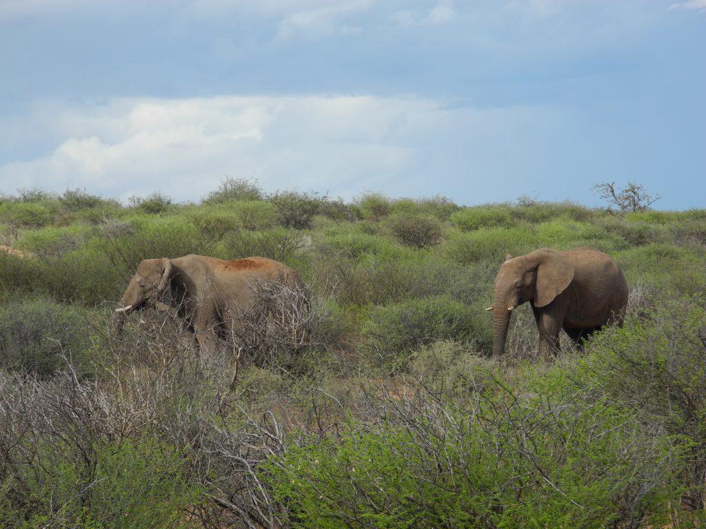 Elefanten auf der Okambara Farm