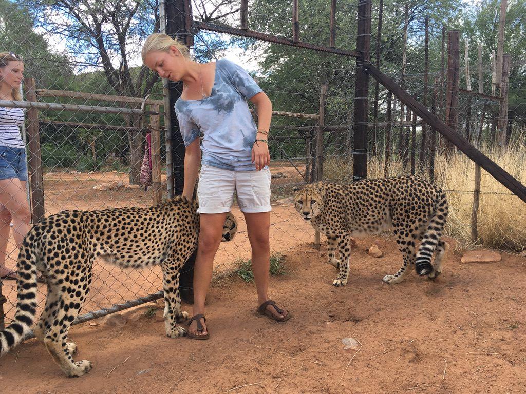 Mit Svenja bei den Geparden
