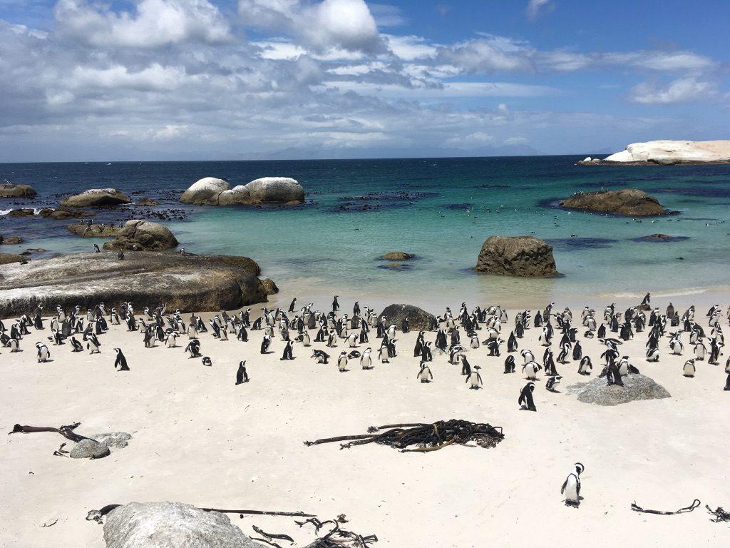 Boulders Beach mit Pinguin-Kolonie