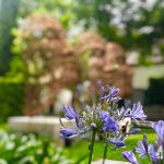 Blumengarten im Grande Provence