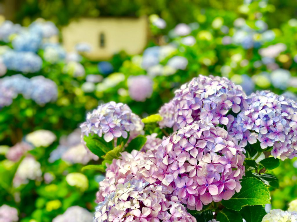 Blumenpracht im Vergelegen