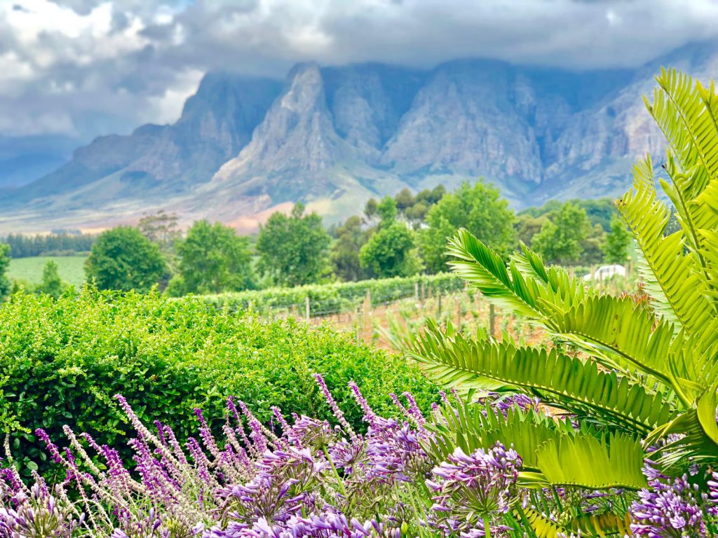 Winelands Panorama