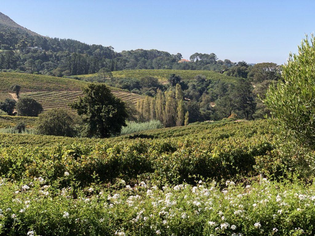 Wie im botanischen Garten - Constantia Glen