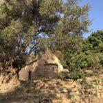 Kirche vor uralten Olivenbäumen
