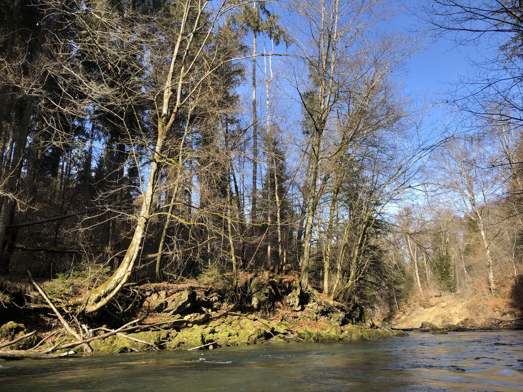 Grüne Natur im Februar