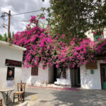 Blütenpracht in Mírtos