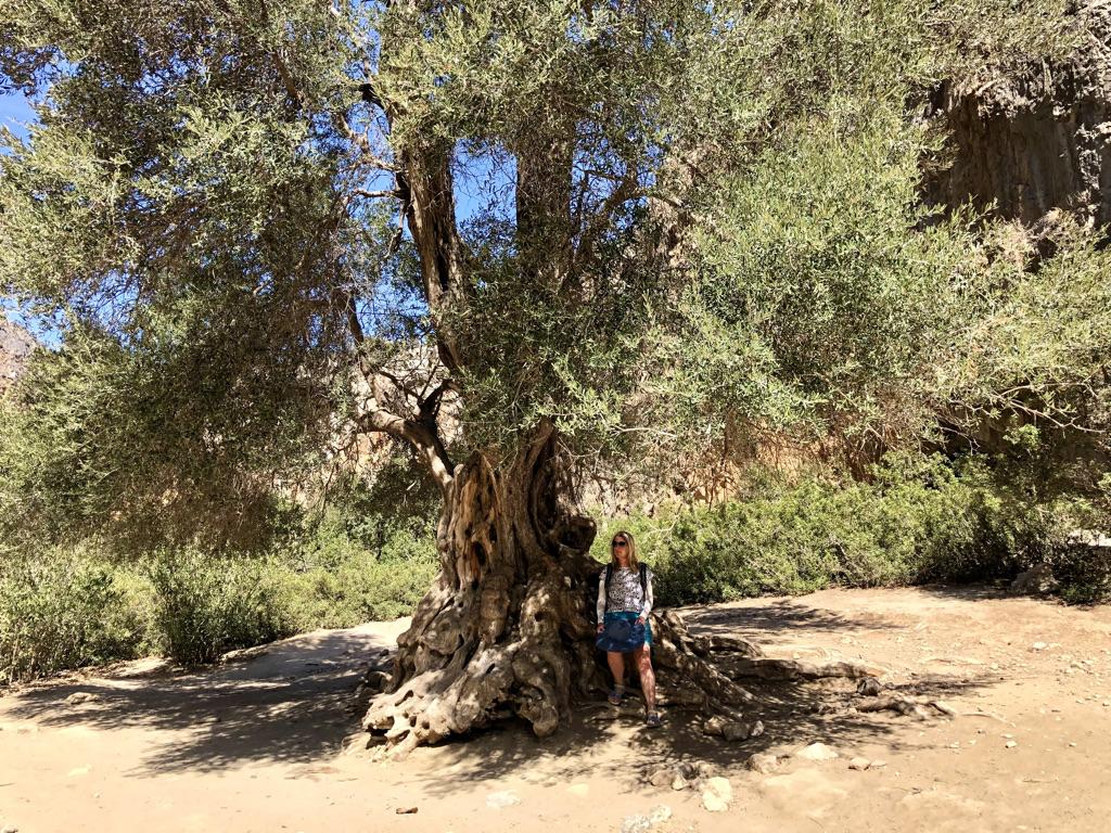 Unter dem alten Olivenbaum in der Agiofárango-Schlucht