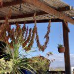 BOTANO Cretan Mountain Herbs